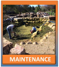 Spring & Summer Pond & Water feature Maintenance Services